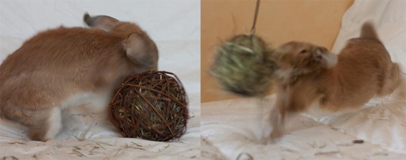 Как сделать своими руками игрушку для кролика
