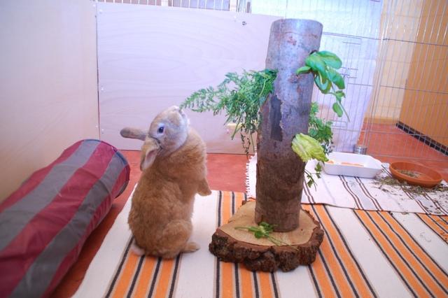 Для кролика своими руками игрушка