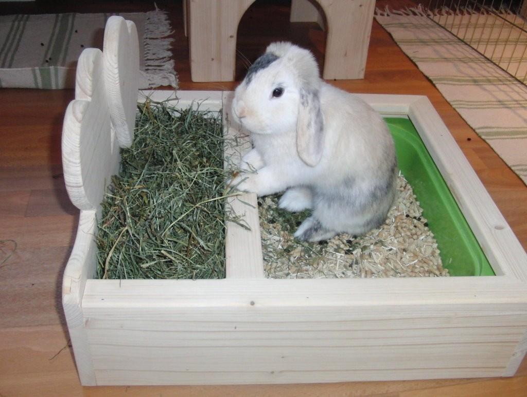 Устройство туалета для кроликов, как приучить littlerabbit.r.