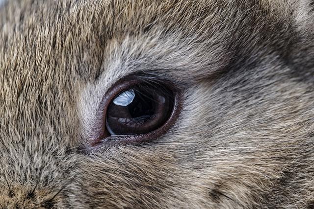 Чем отличается катаракта от глаукомы фото