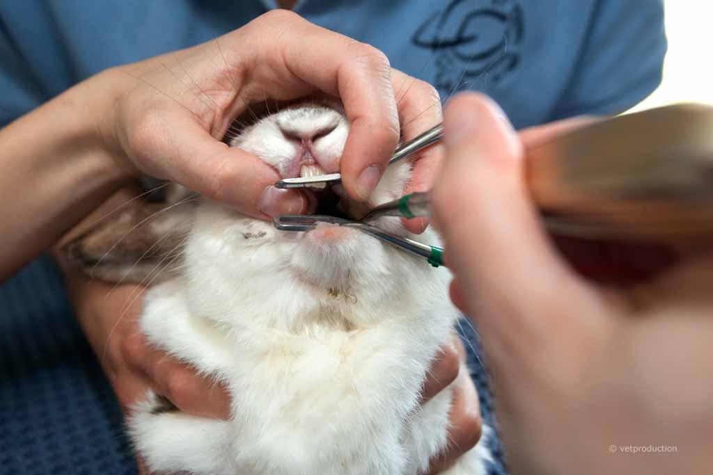 Понос у кроликов чем лечить в домашних условиях